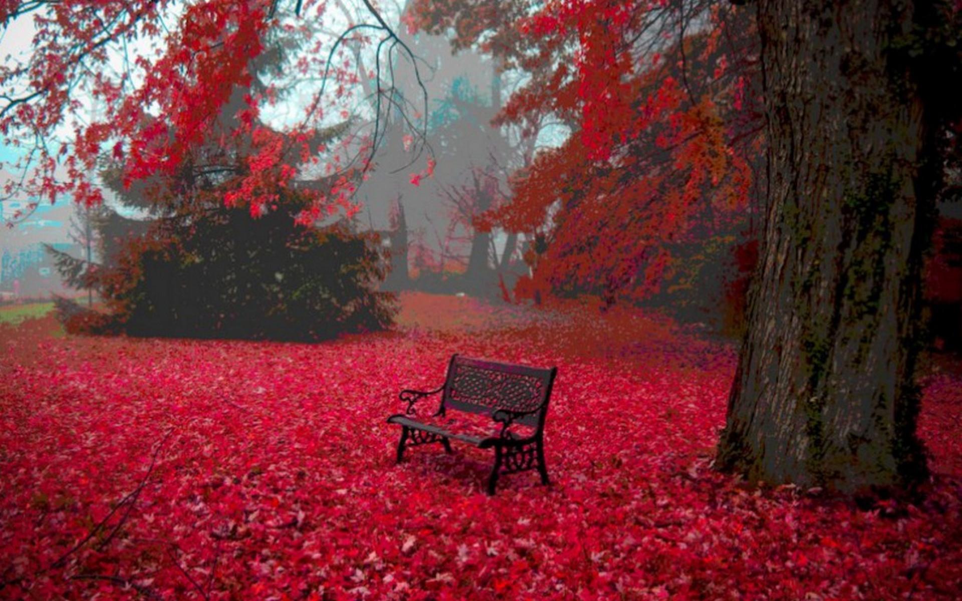 Фото на рабочий стол осенний лес004