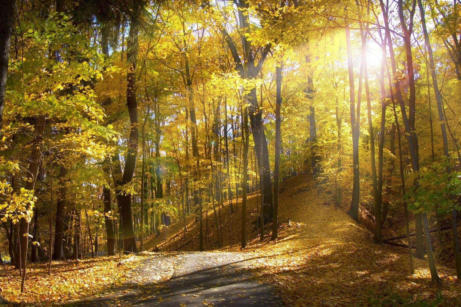 Фото на рабочий стол осенний лес005