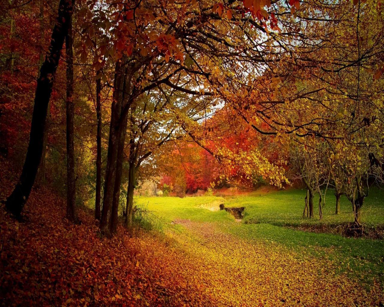 Фото на рабочий стол осенний лес009