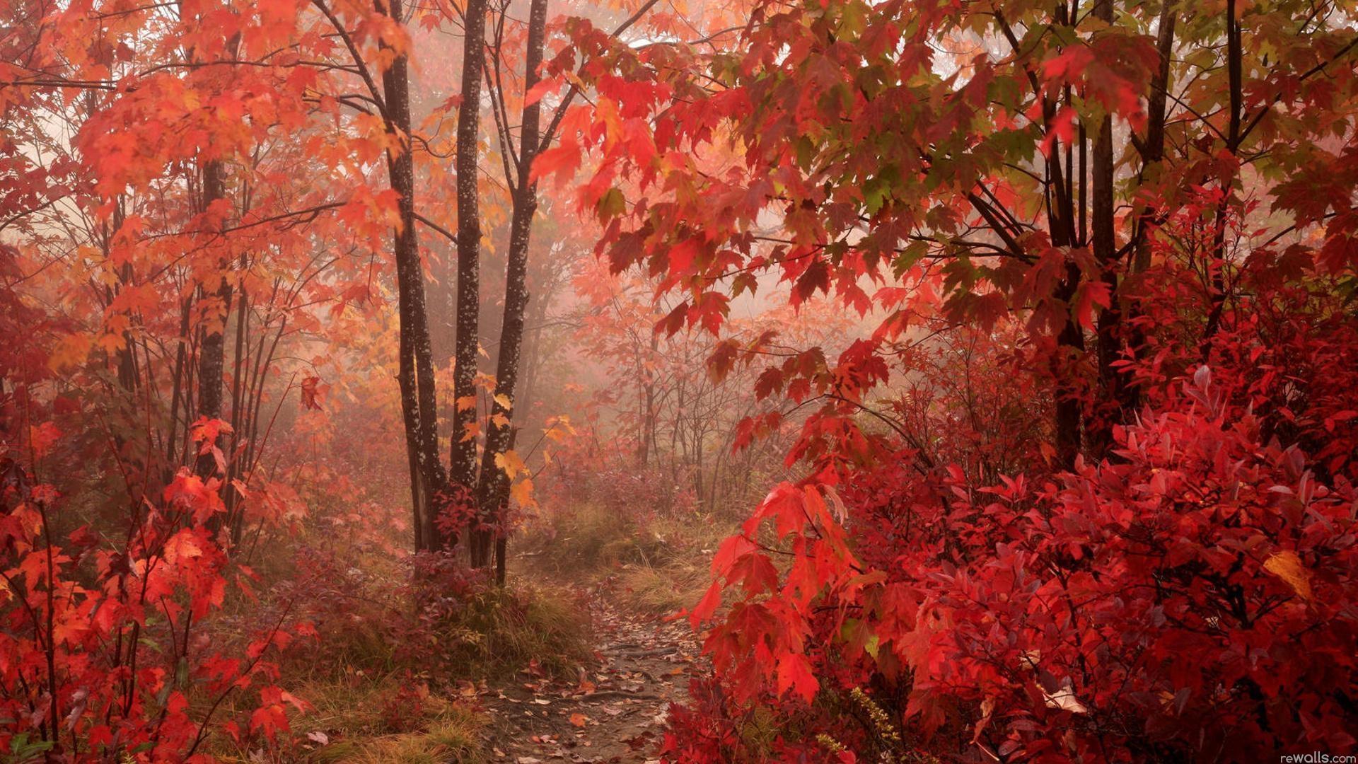 Фото на рабочий стол осенний лес013