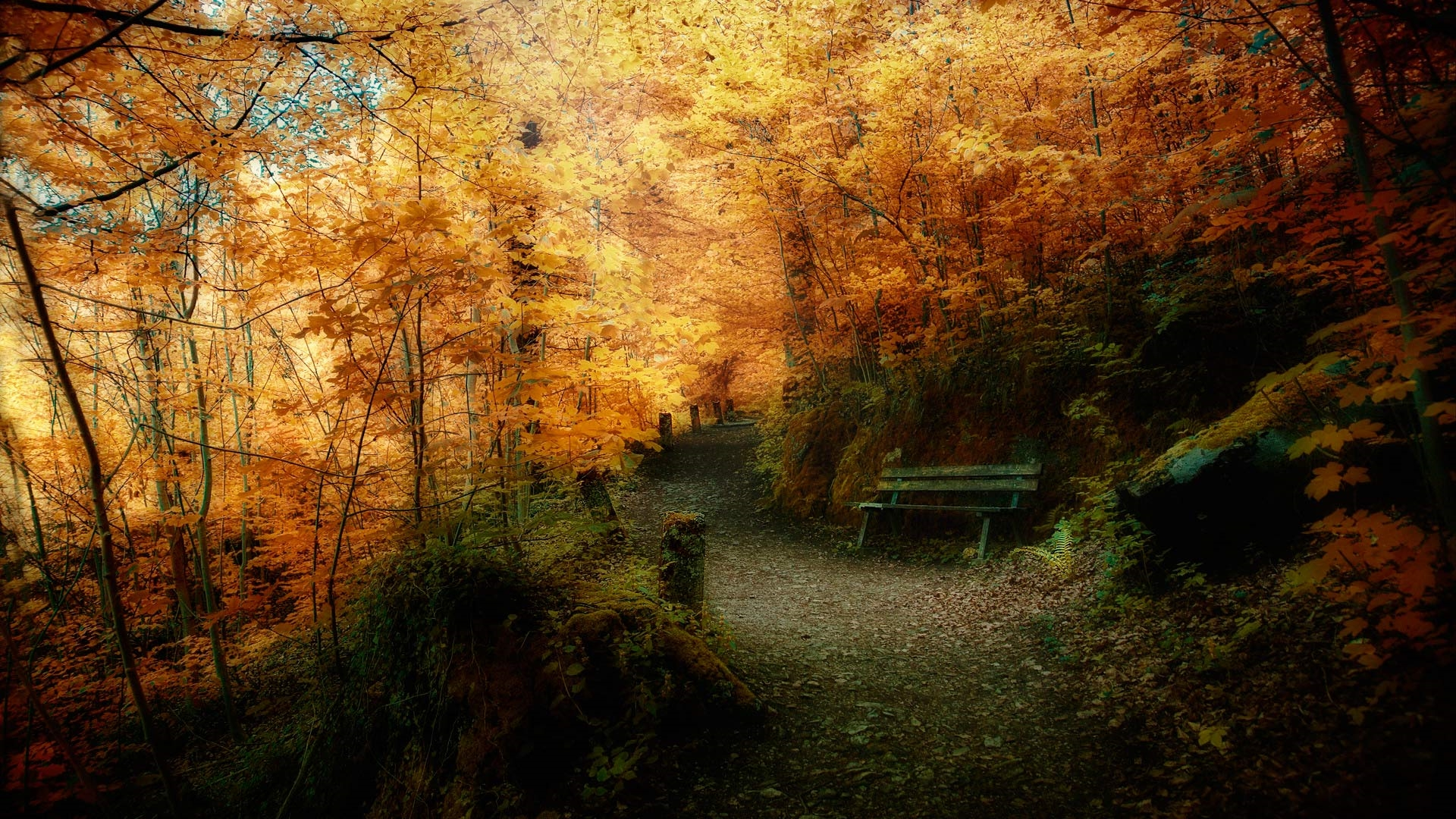 Фото на рабочий стол осенний лес014