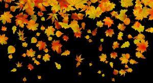 Фото осенних листьев с названиями   подборка019