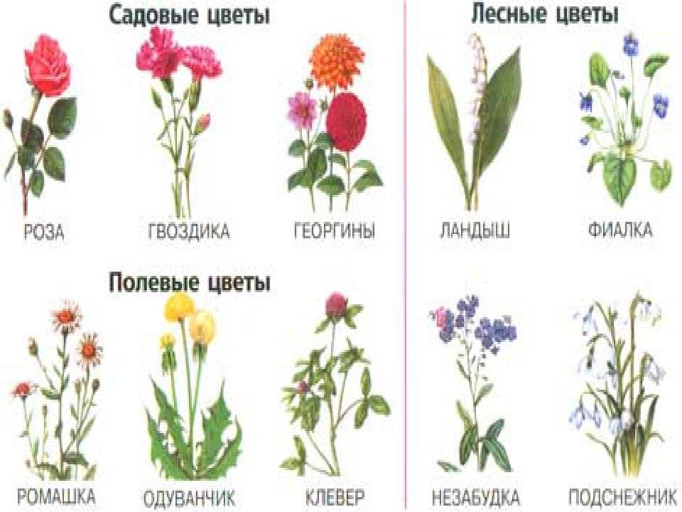 моющаяся картинки и названия цветов садовых мест