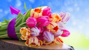 Цветы красивые картинки на рабочий стол020