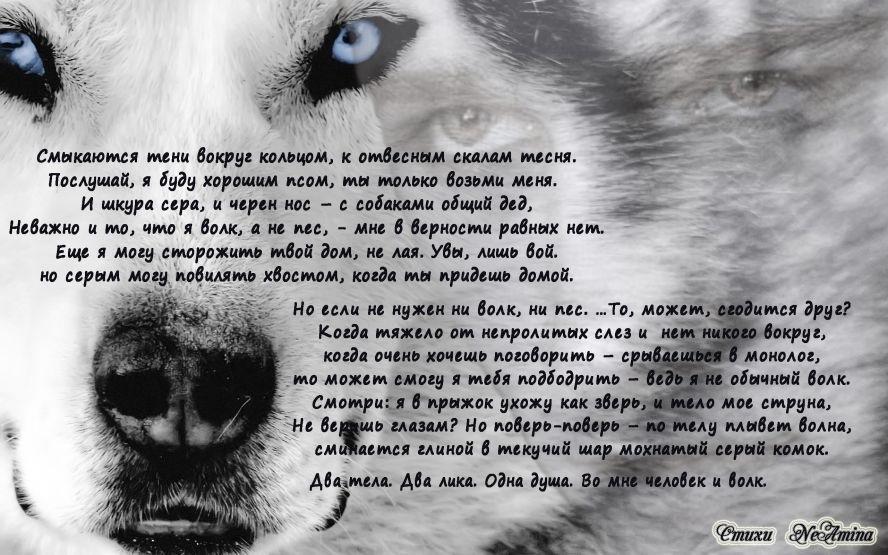 Картинки с надписями про волчицу, надписью пошло все