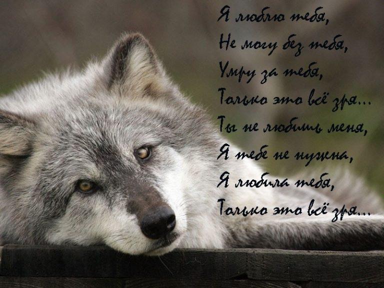Открытки юбилеем, смотреть картинки волки с надписями