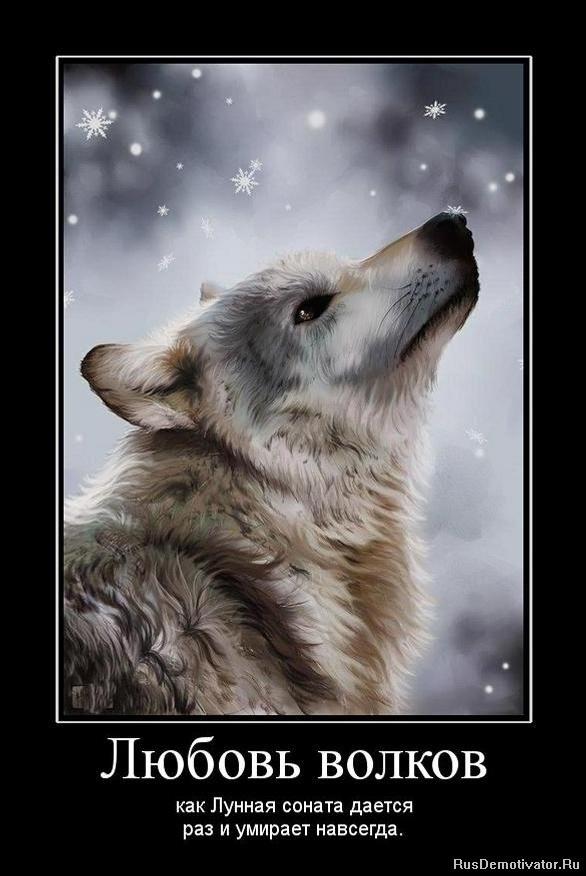 Красивые картинки с надписями о жизни волков