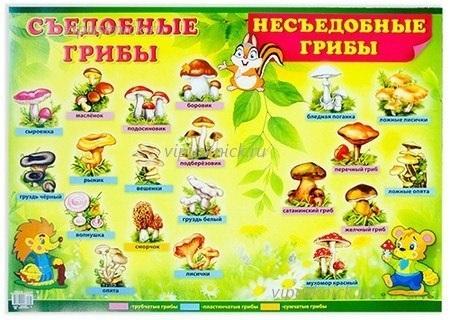 Дети в лесу собирают грибы   подбора картинки 013