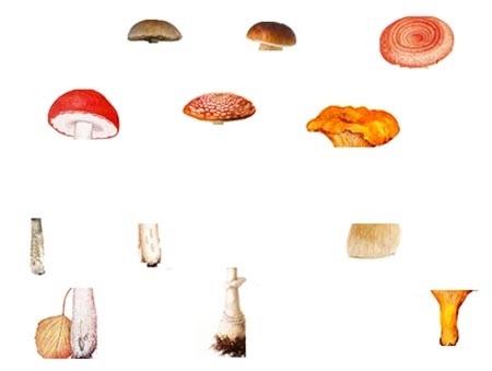 Дети в лесу собирают грибы - подбора картинки