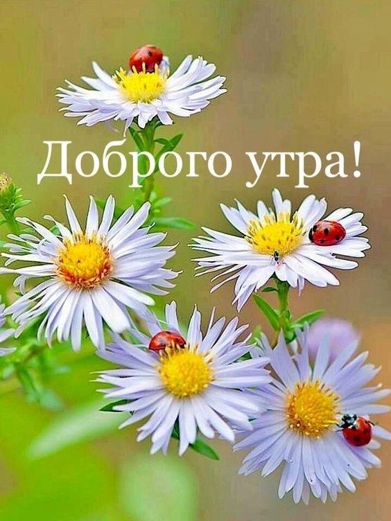 Доброе утро красивые открытки с природой007