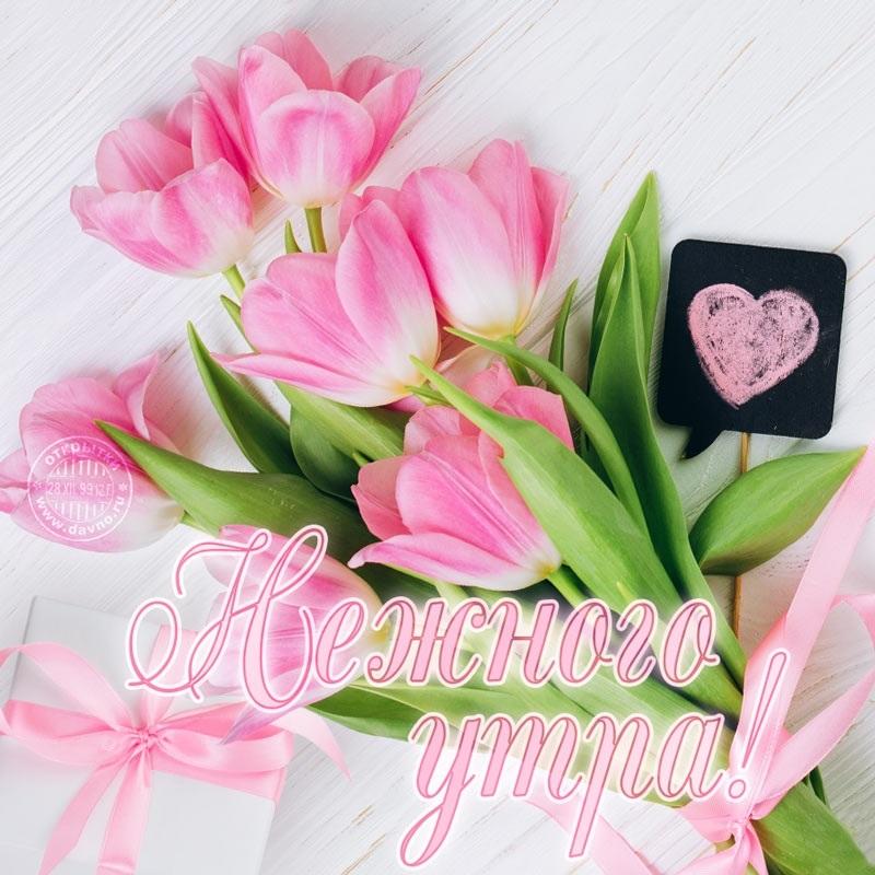 Доброе утро открытки нежные с цветами002