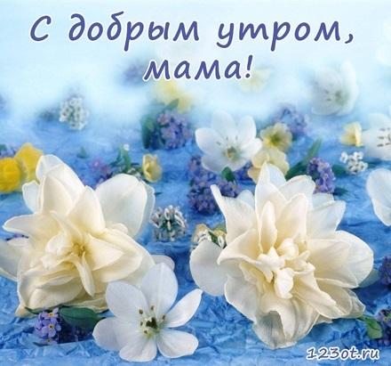 Доброе утро открытки нежные с цветами016