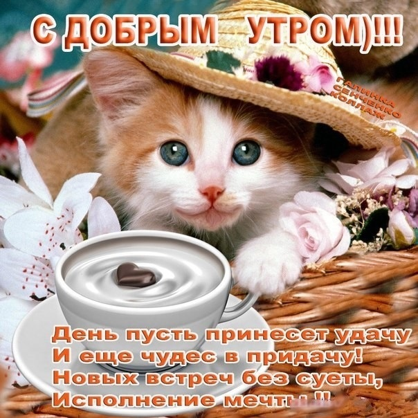 Красивые открытки с кошками с добрым утром, рисовать