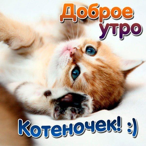 Доброе утро открытки кошки, фразами цитатами про