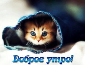 Доброе утро открытки прикольные с котами019