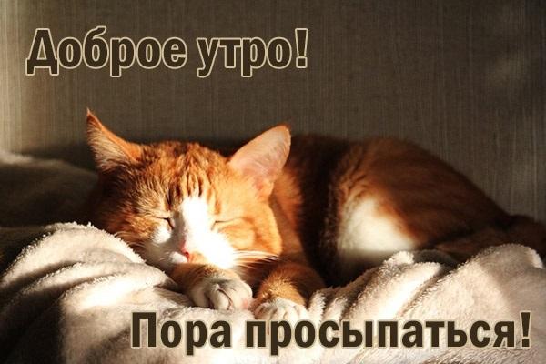 Фото открытки, прикольные картинки пора вставать доброе утро