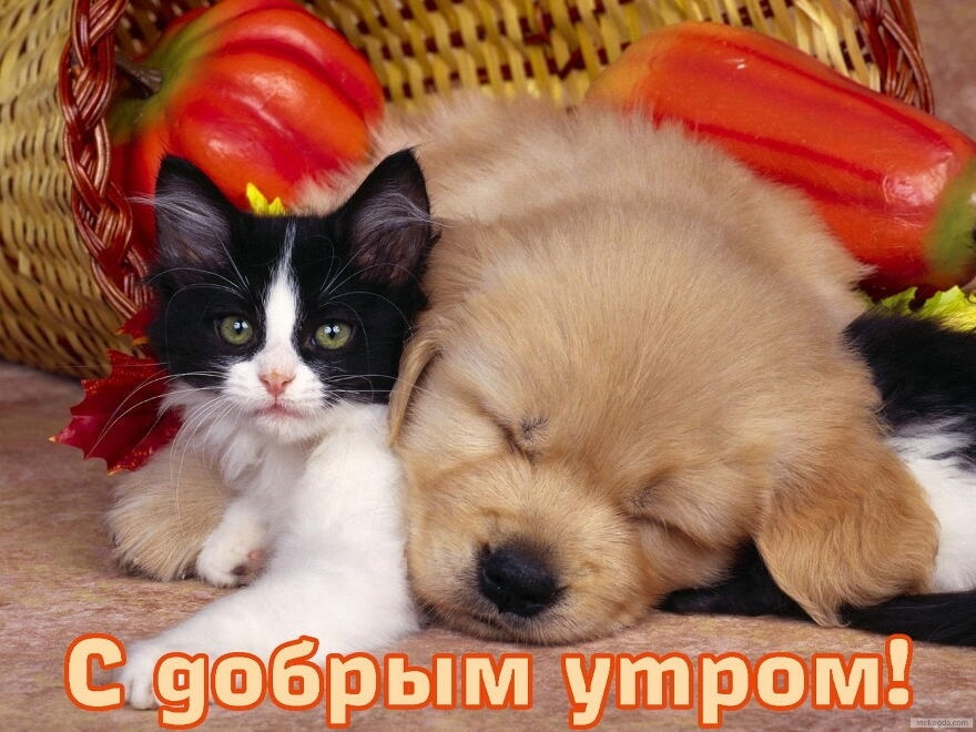 Доброе утро прикольные открытки с животными001