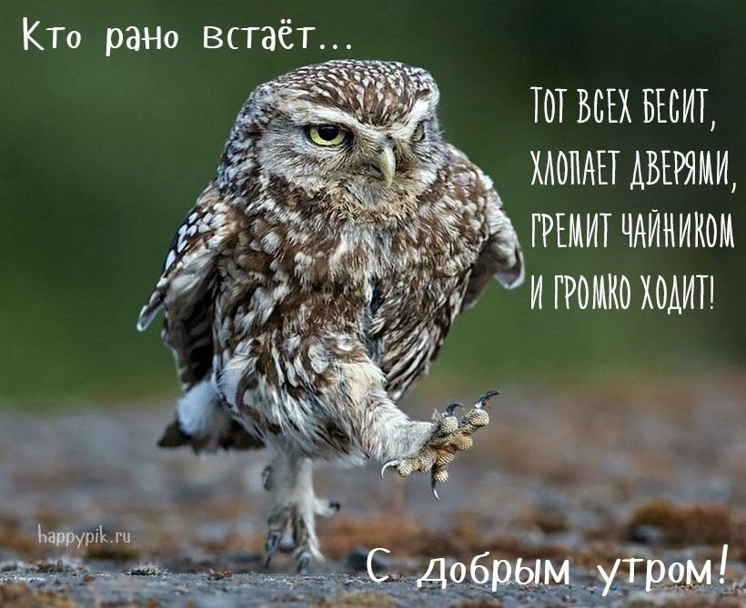 Доброе утро прикольные открытки с животными002