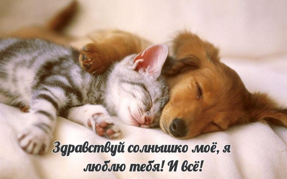 Доброе утро прикольные открытки с животными004