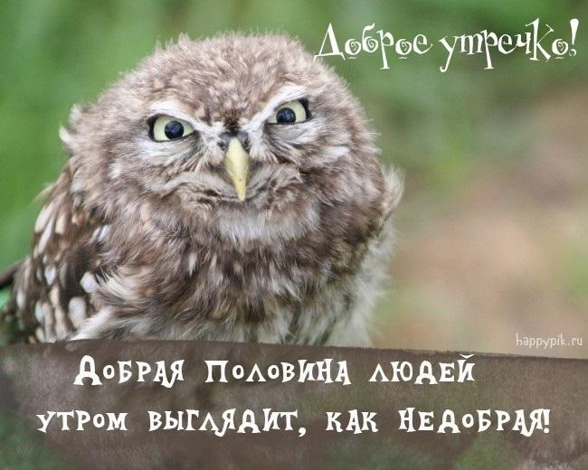 Доброе утро прикольные открытки с животными006