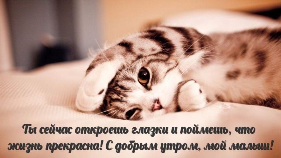 Доброе утро прикольные открытки с животными007