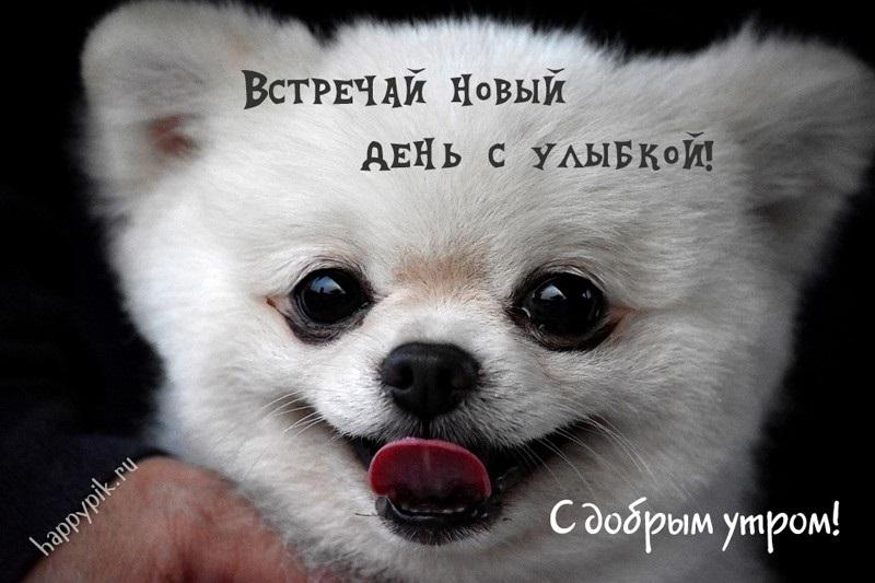 Доброе утро прикольные открытки с животными008