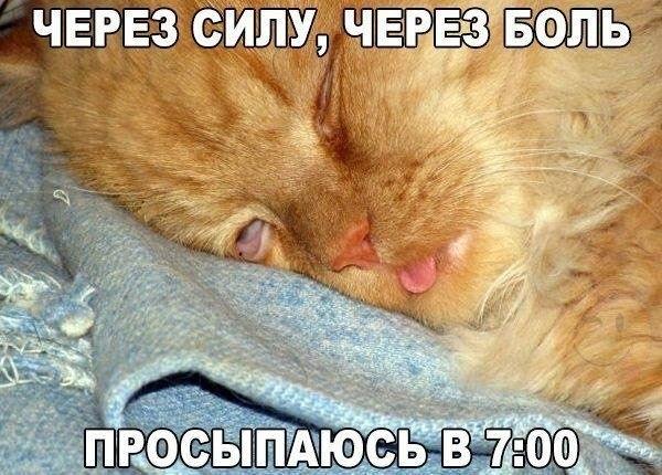 Доброе утро прикольные открытки с животными011