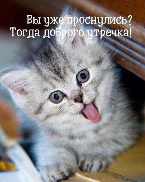 Доброе утро картинки прикольные с кошкой