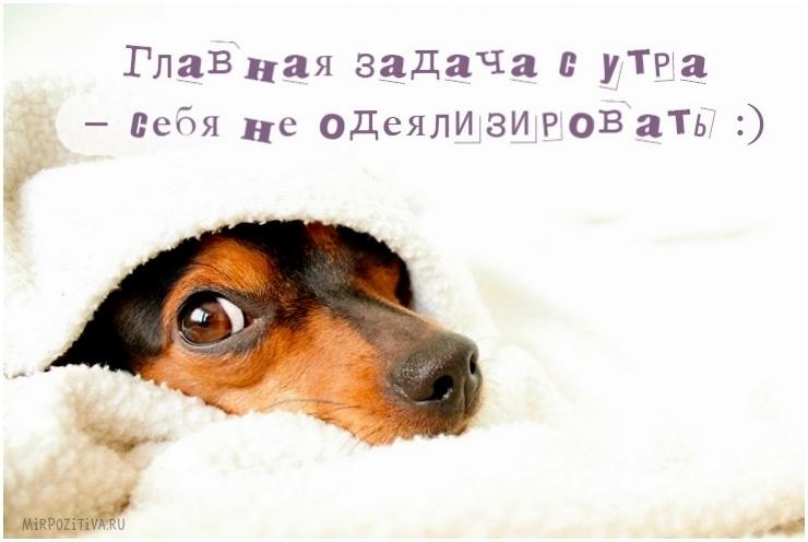 Доброе утро прикольные открытки с животными013