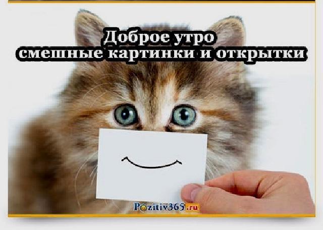 Доброе утро прикольные открытки с животными016