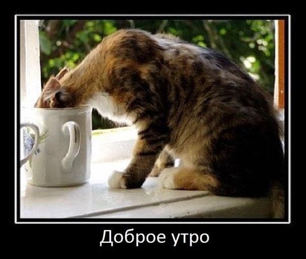 Доброе утро прикольные открытки с животными018