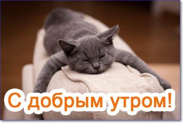 Доброе утро прикольные открытки с животными020