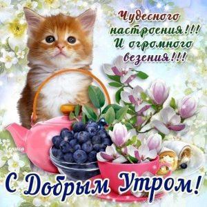 Доброе утро с пожеланиями в открытках005