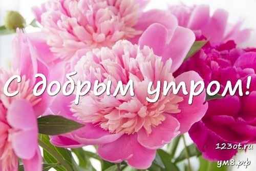 Доброе утро с цветами для женщины018