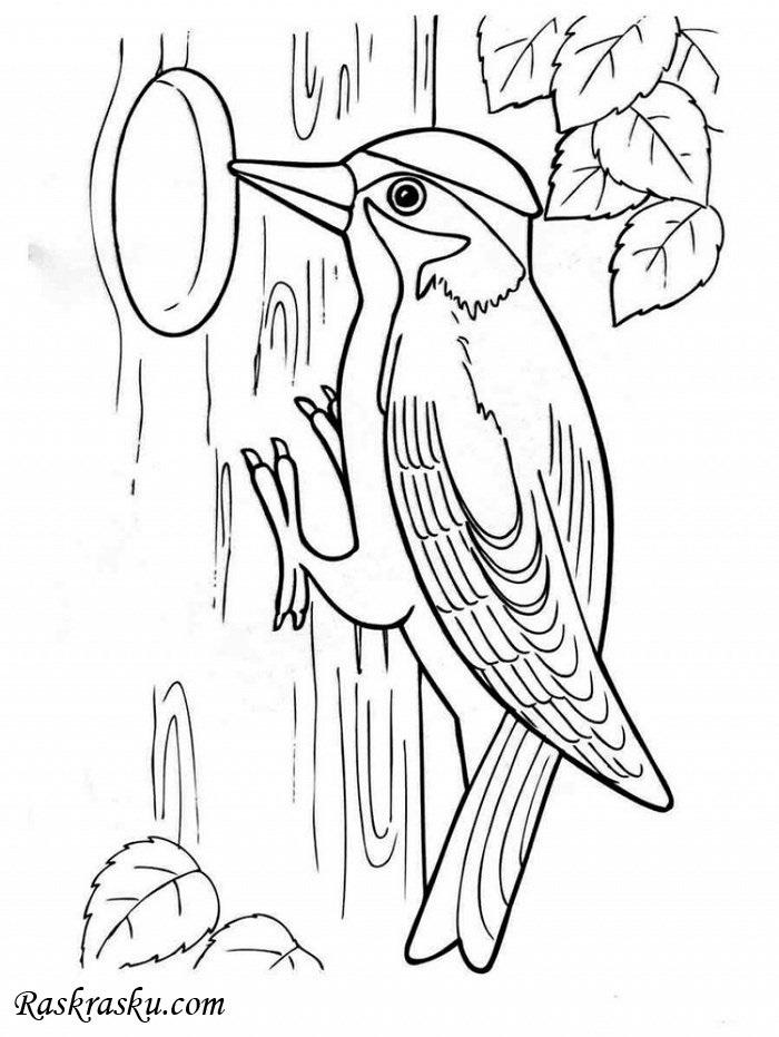 Картинка для детей дятел на дереве 003