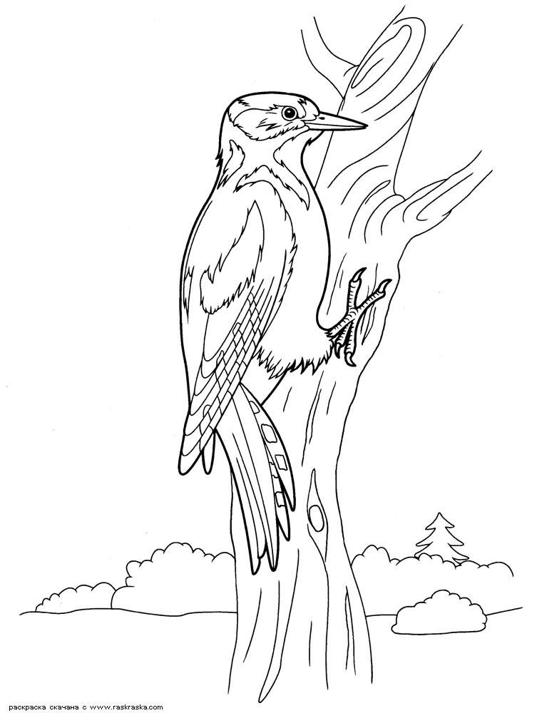 Картинка для детей дятел на дереве 007