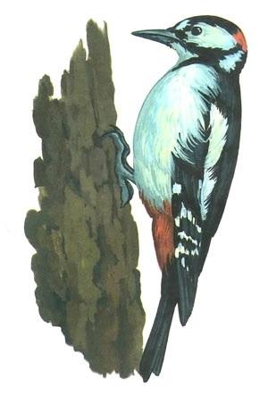 Картинка для детей дятел на дереве 020