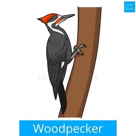 Картинка для детей дятел на дереве 023