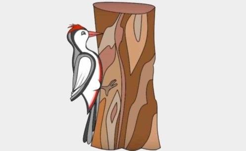 Картинка для детей дятел на дереве 024
