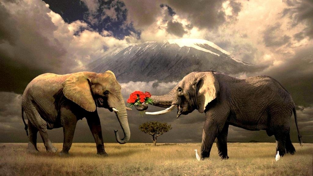 Все про слонов картинки