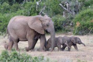 Картинки на всемирный день защиты слонов019