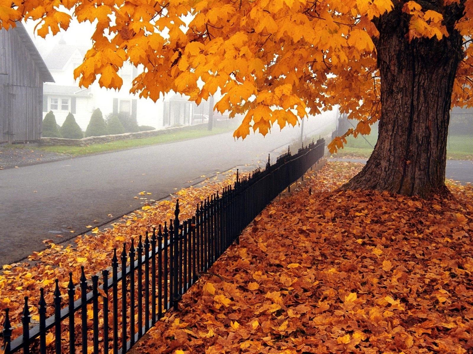 Картинки про осень на рабочий стол 005