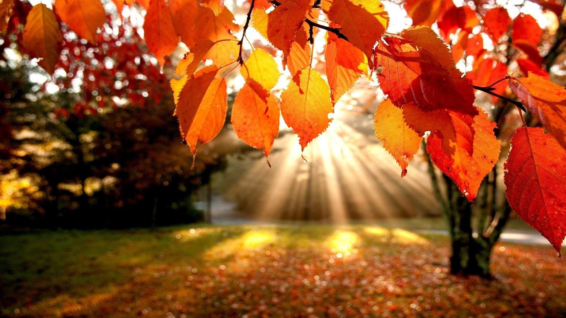 Картинки про осень на рабочий стол 008