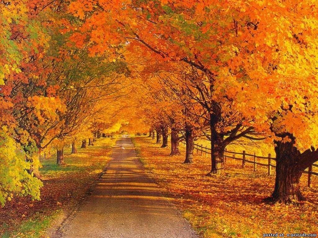 Картинки про осень на рабочий стол 012