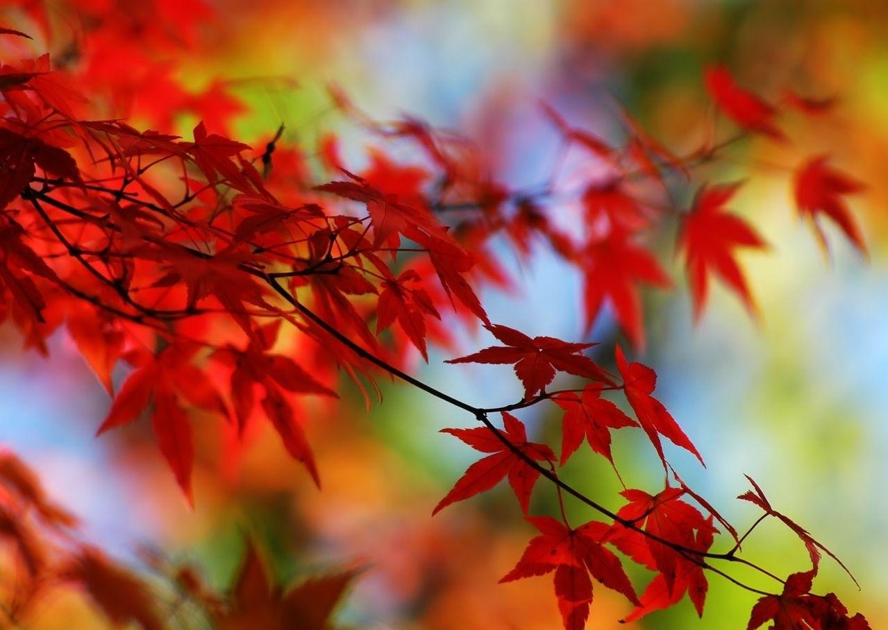 Картинки про осень на рабочий стол 013