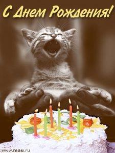 Картинки с кошками с днем рождения019