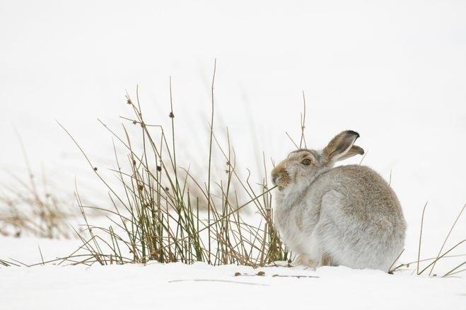 Картинки что зимой едят зайцы в лесу 018