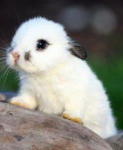 Картинки что зимой едят зайцы в лесу 022
