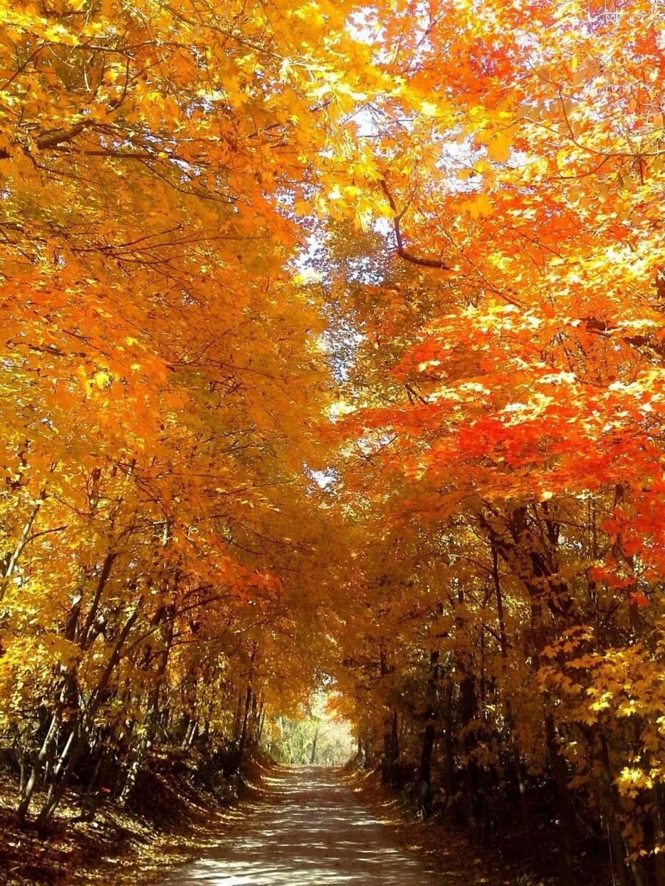 Открытки, открытки осень золотая фото