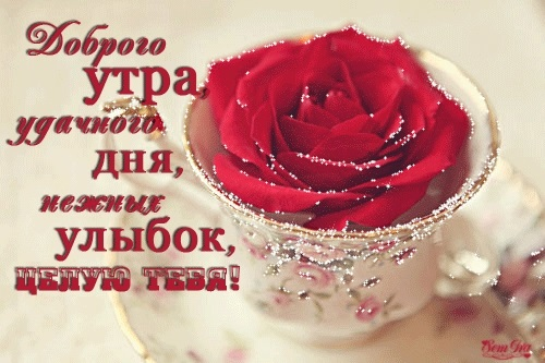 Открытка доброе утро и хорошего дня целую009